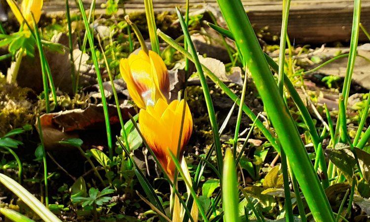 Qigong im Frühling