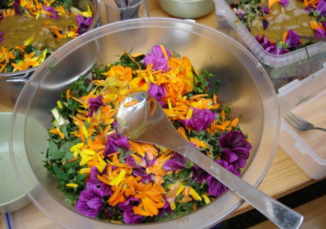Wildkräutersalat frisch aus dem Garten